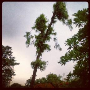 Walk into thestorm